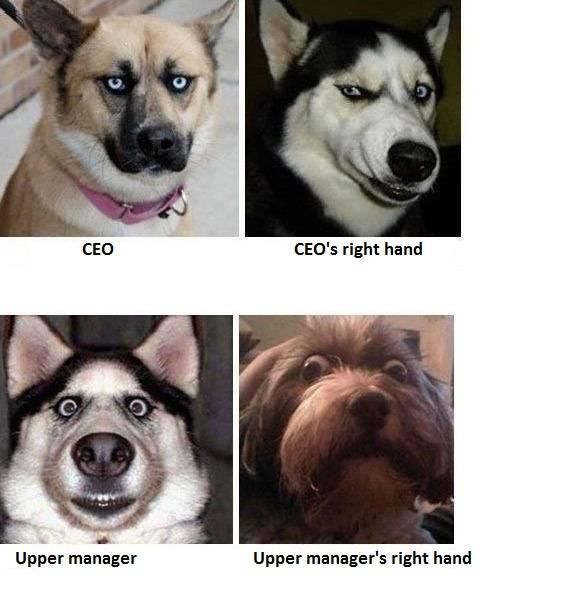 dog110