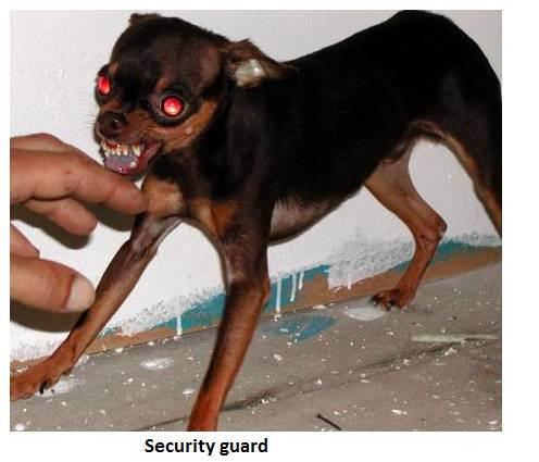 dog111
