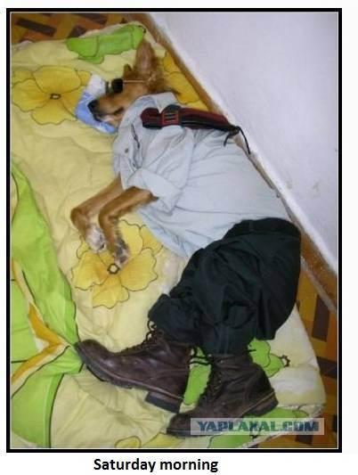 dog151